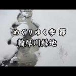 めぐりゆく季節 輪厚川緑地(2018.6)