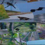 北広島の空を飛ぶ鳥を追って~総集編(2019.1)