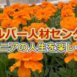 シルバー人材センター~シニアの人生を楽しく(2019.5)