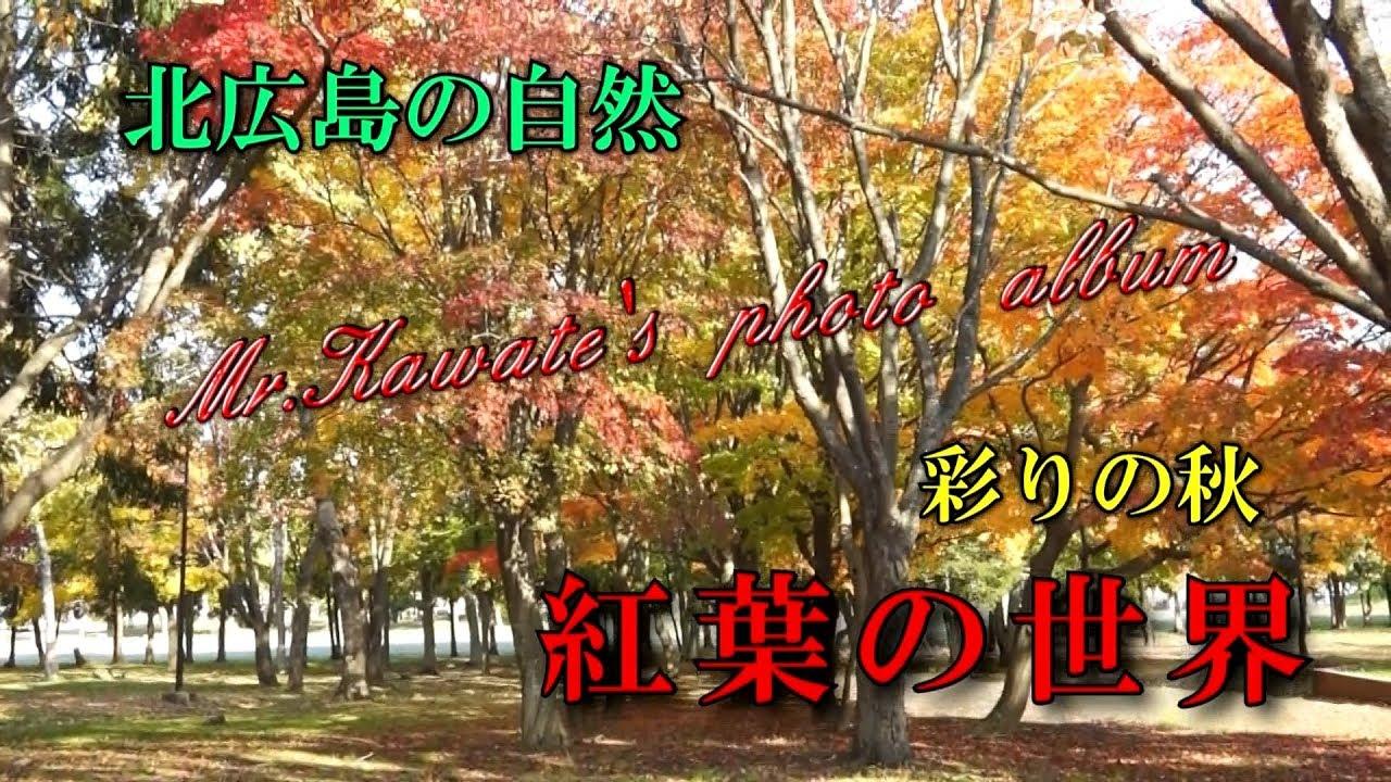 北広島の自然~彩の秋 紅葉の世界(2019.11)
