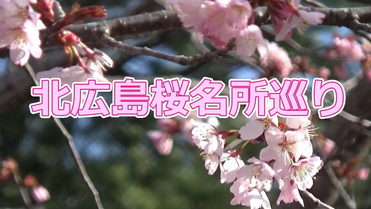 マイタウンニュース『北広島桜名所巡り』(2021.5)
