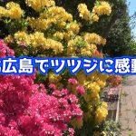 "<span class=""title"">マイタウンニュース『北広島でツツジに感動』(2021.6)</span>"
